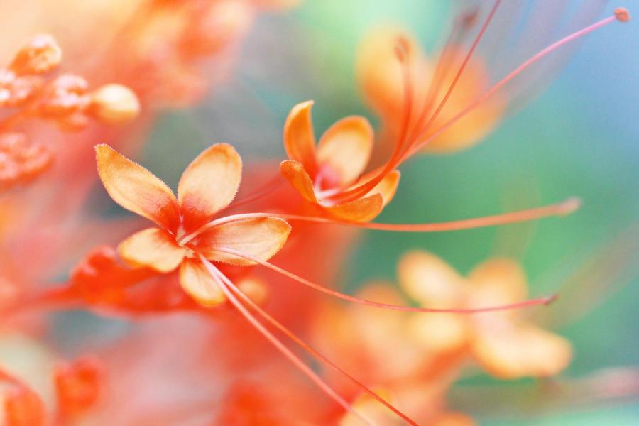 http://fc09.deviantart.net/fs70/i/2010/175/5/f/little_flower_in_wonderland__I_by_arthika.jpg