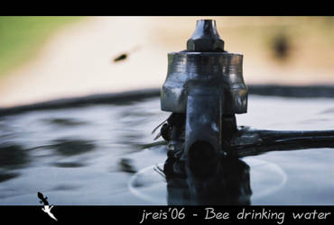 bee drinking water by jreis