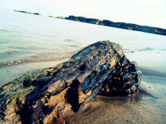 Driftwood by hushedvacancy
