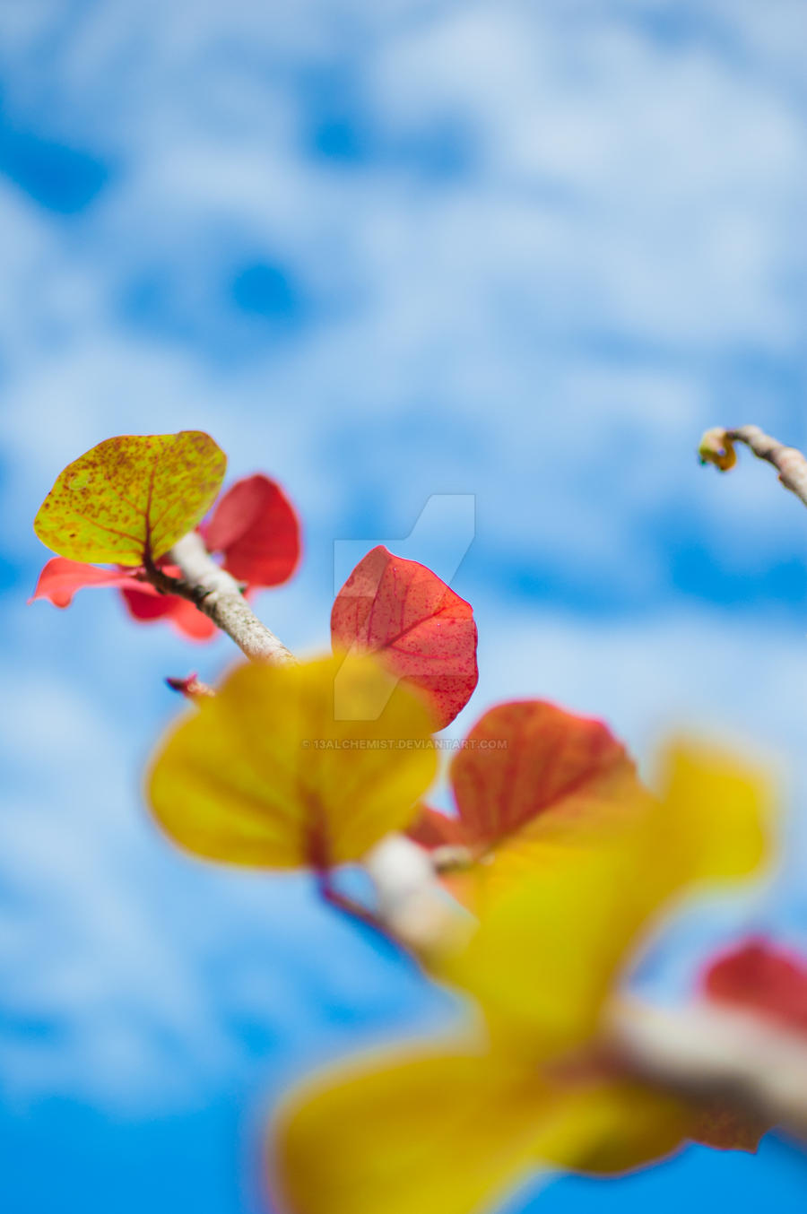 leafing reality by 13Alchemist
