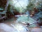 Upstate South Carolina Forest