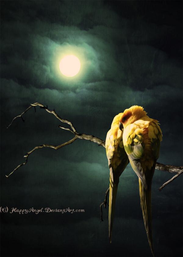 Love Birds by HappyAngel