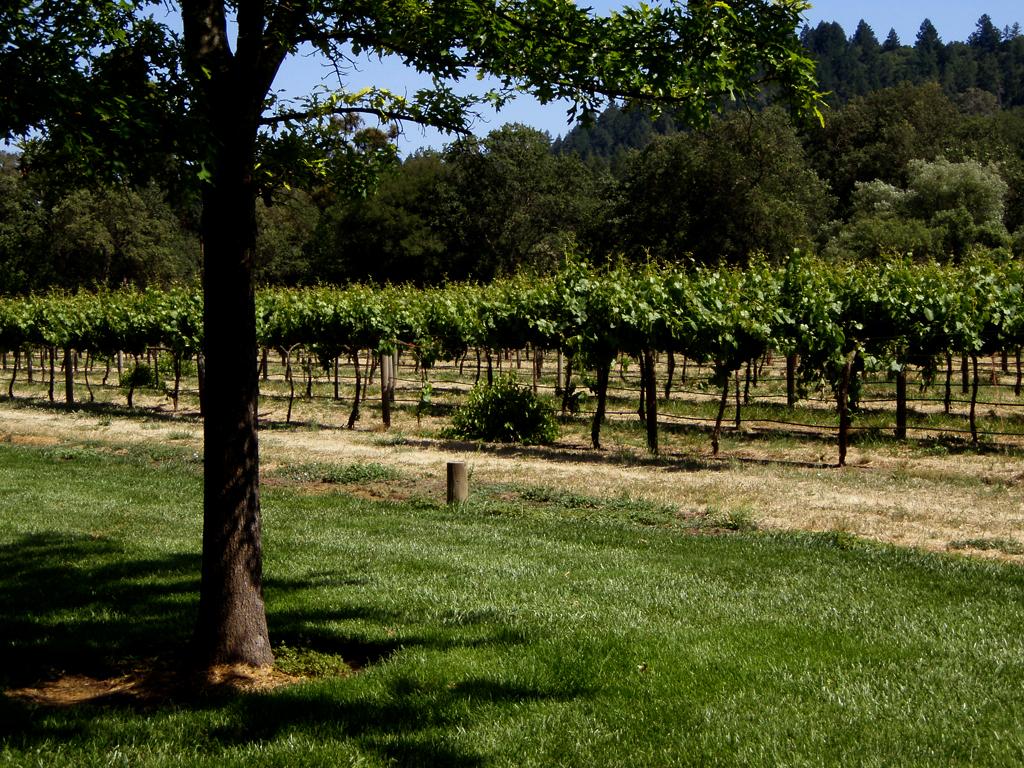 Speed dating vineyard cincinnati