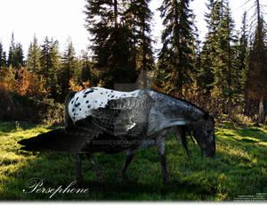 Persephone - Blue Roan Appaloosa Pegasus