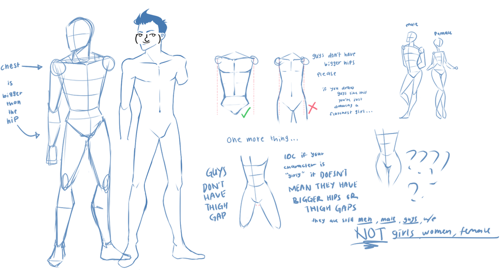 basic male anatomy by Whippe on DeviantArt