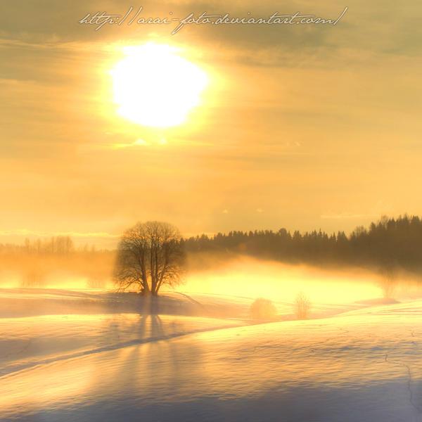 L'arbre solitaire by Arai-Foto