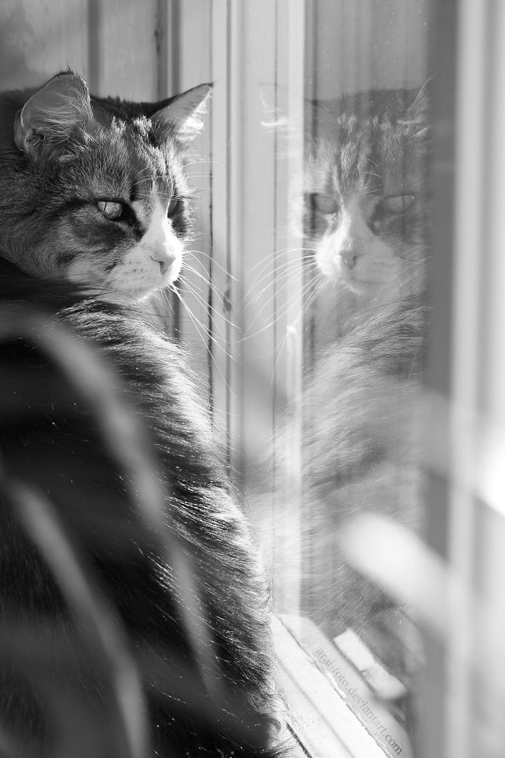 Mirrored Look by Arai-Foto