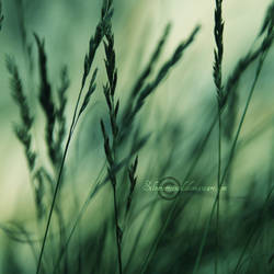 Windswept by SilverScreened