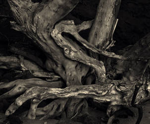 Twisted Root by maxpower