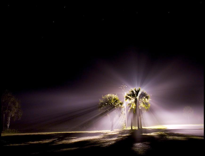 pulaski tree by maxpower