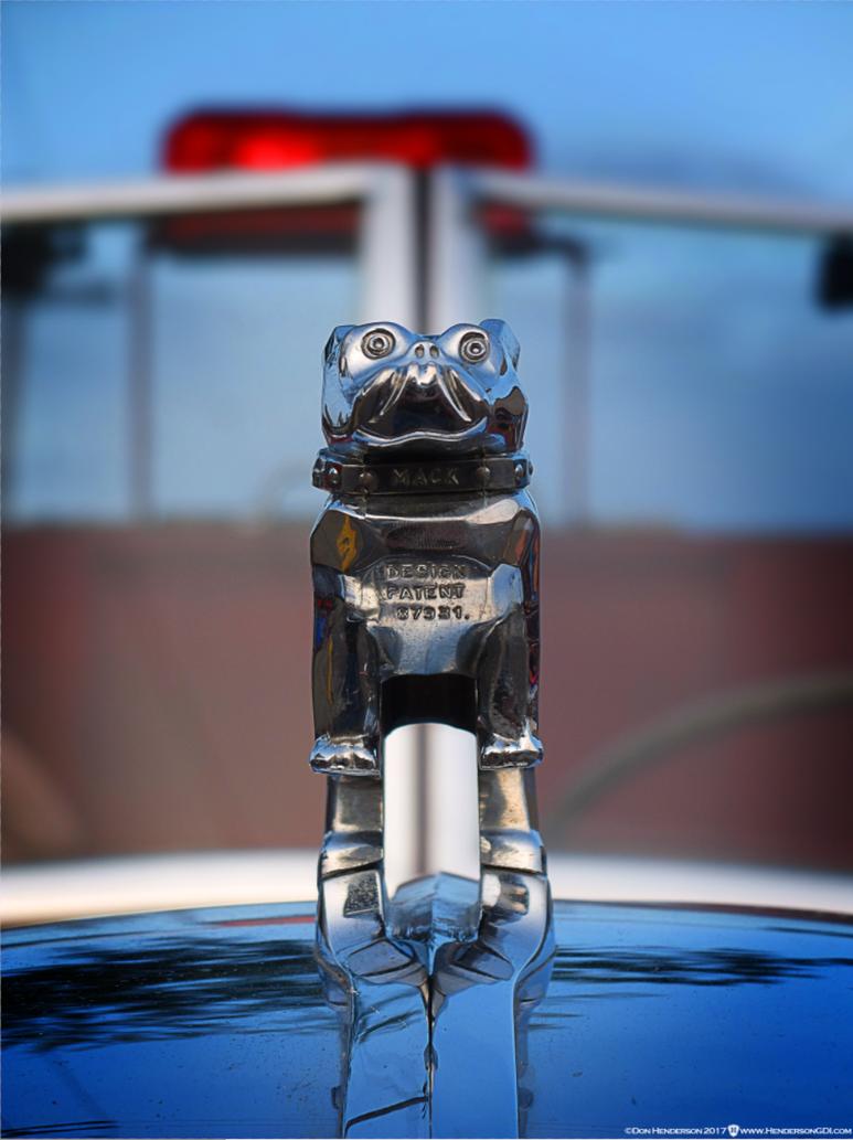 bulldog by yankeedog