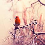Scarlet by Karisca