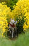 yellow adventure