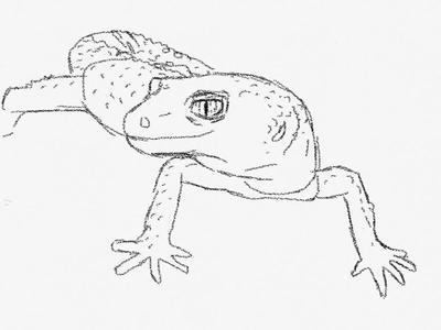 leopard gecko line art by hayleybuggy