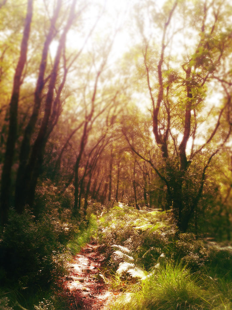 dreamy forestracsterart on deviantart