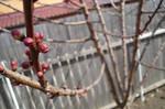 Spring has mighty powers