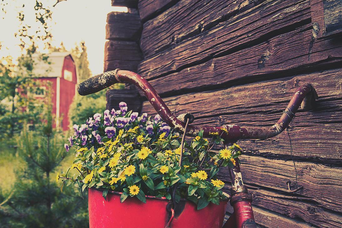 Rust, bucket and two flowerbaskets by komedian