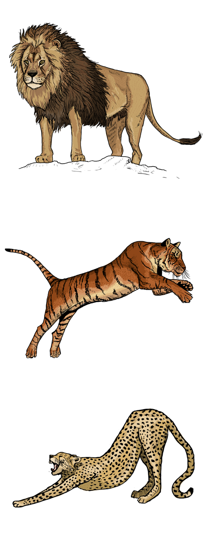 Lion Tiger Cheetah By Clairestclara On Deviantart