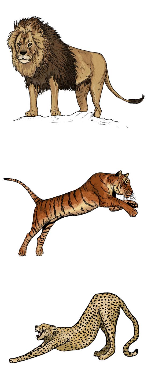Cheetah vs lion vs tiger - photo#11