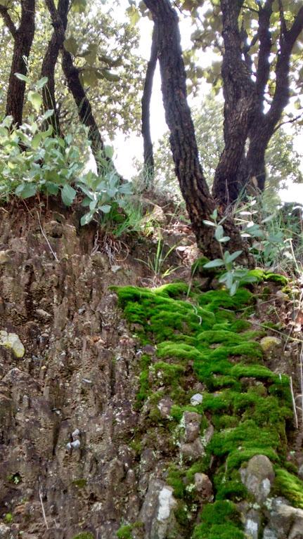 Moss by YoLoL
