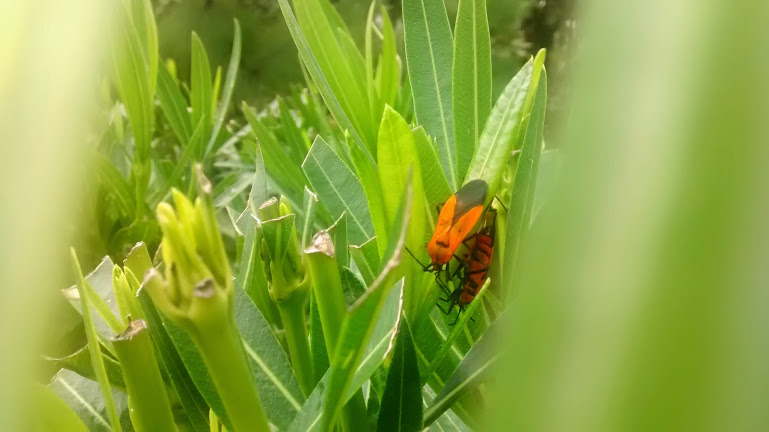 Bugs by YoLoL