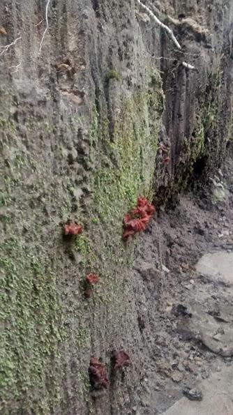 Fungus by YoLoL