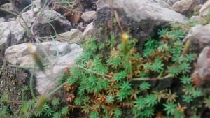 Mini Plants by YoLoL