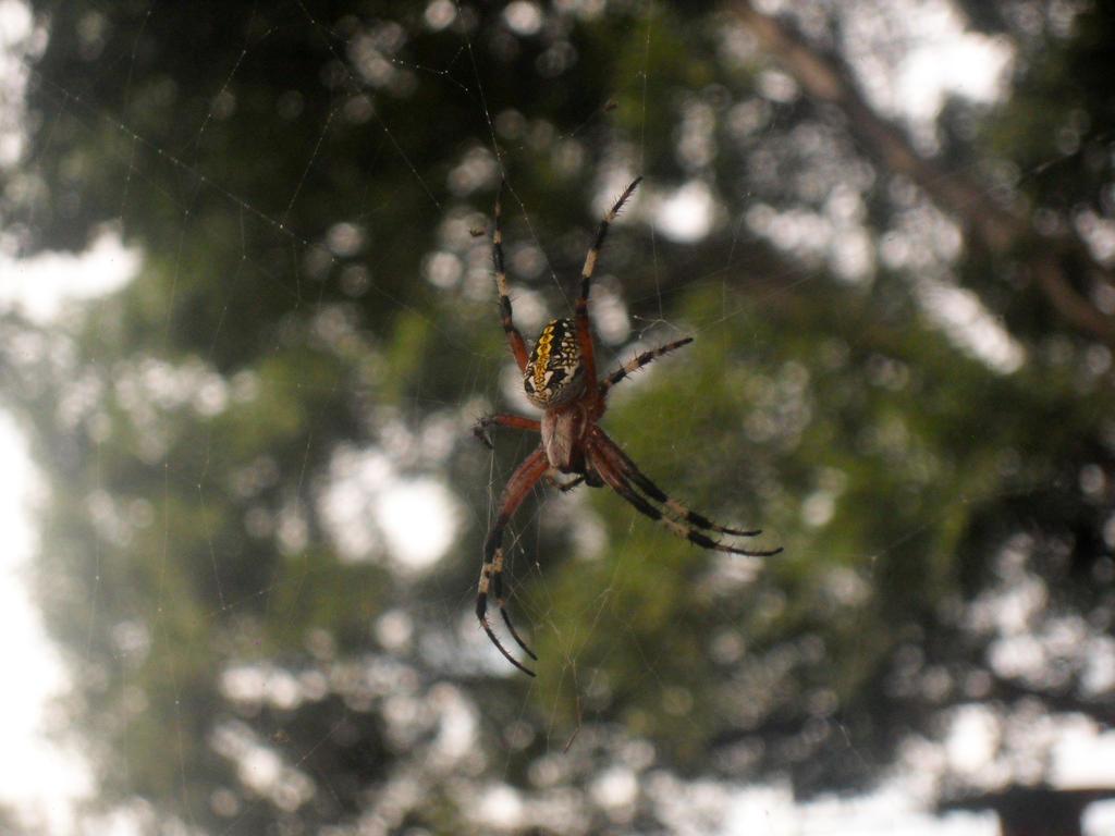 Spider by YoLoL