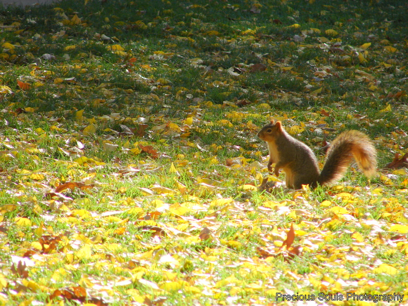 fall squirrel by precioussouls on deviantart