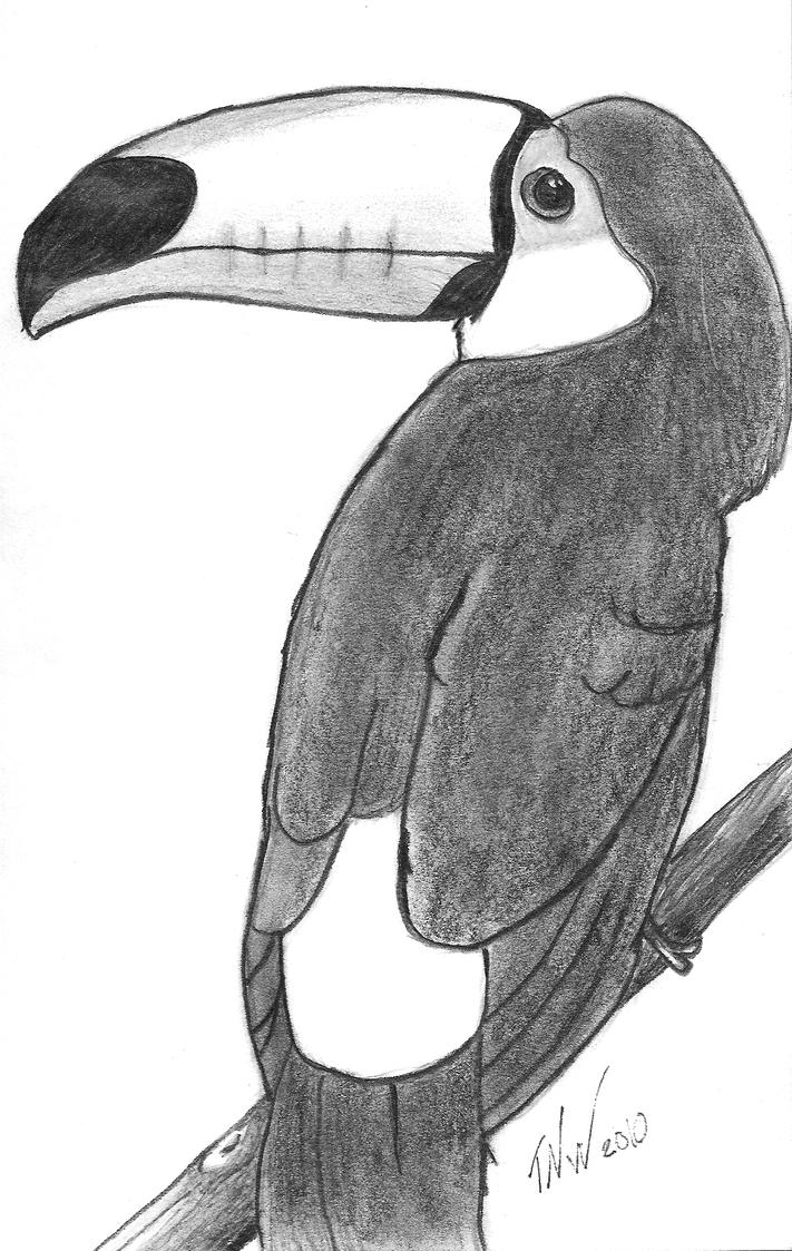 Toucan Drawing Step by Step Toucan Drawing by