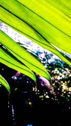 Green Pandiyangan by Irkamala