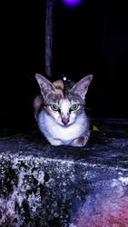 Night Cat by Irkamala
