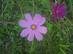 Flower3 by maminscris