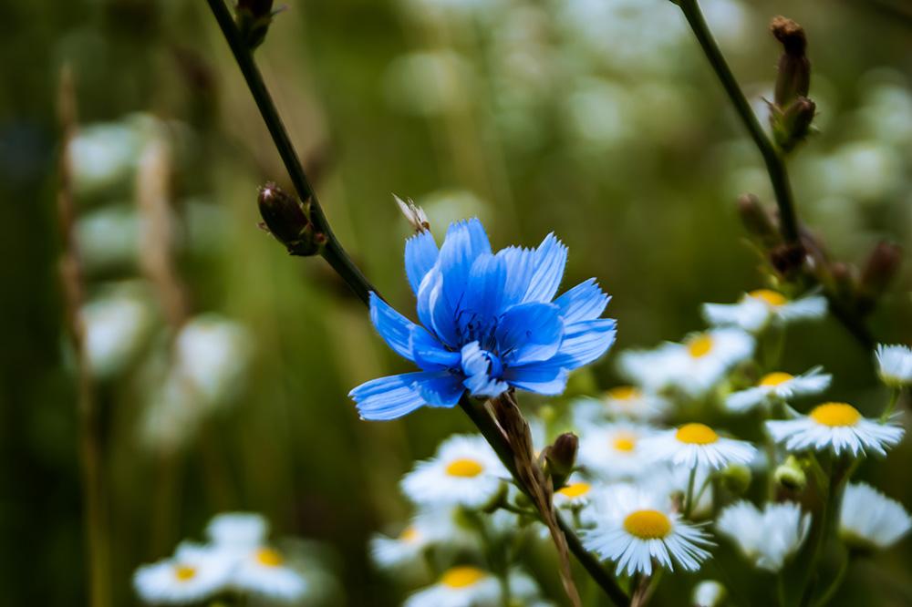 Little Blue Dream by MiaJitaru