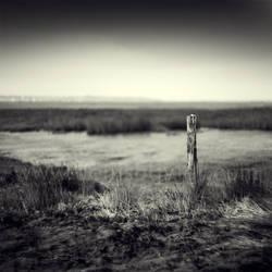The Watcher by DenisOlivier