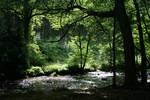 Woody Riverbank