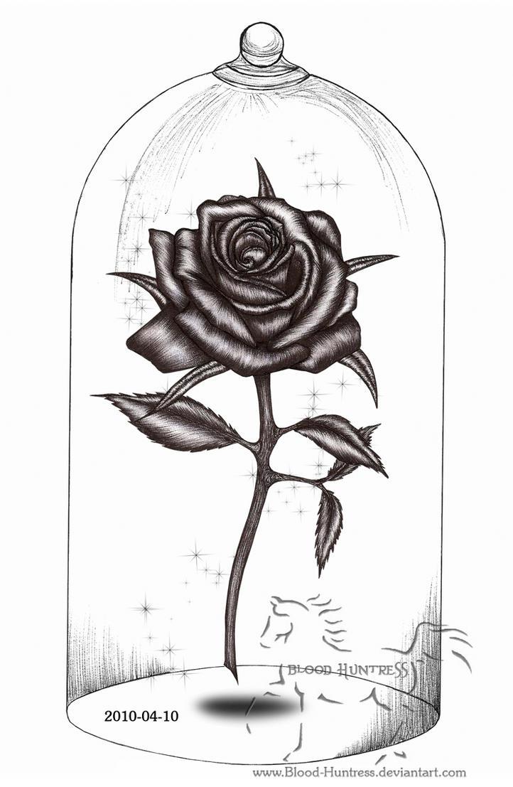 Rose Drawings Barcafontanacountryinncom