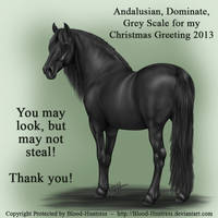 Andalusian, Dominate, Looking Back-Greyscale