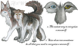 Werewolf Guide - Introduction by Leonca