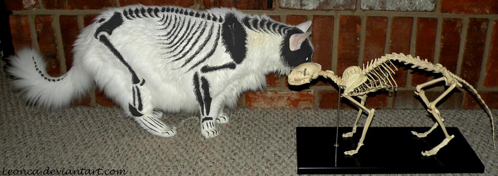 Skeleton painted cat by Leonca on DeviantArt
