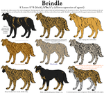 Dog Colors Guide- Brindle