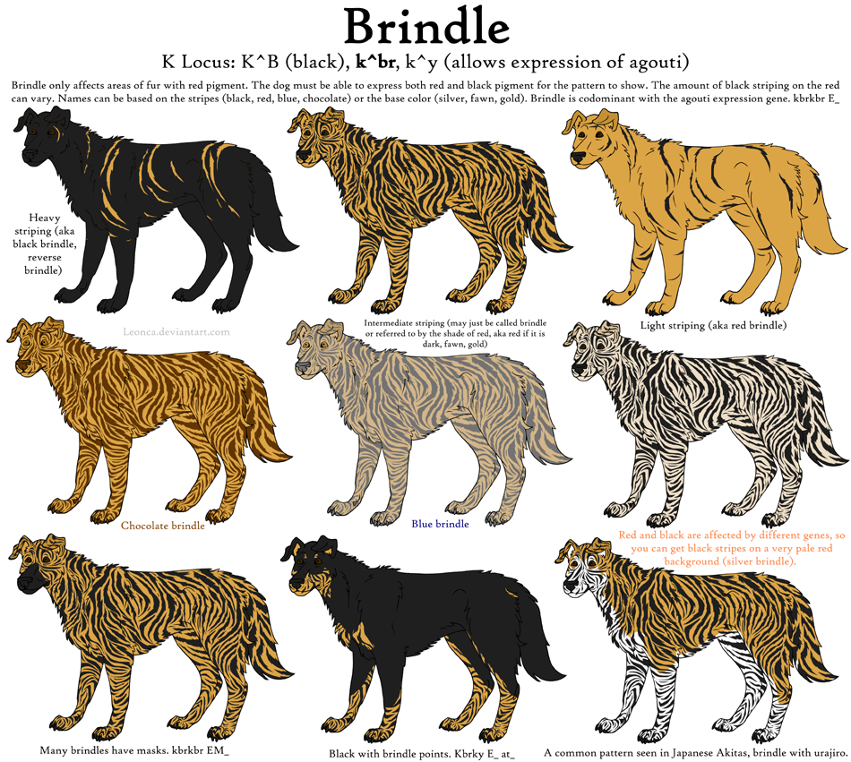 Dog Colors Guide- Brindle by Leonca