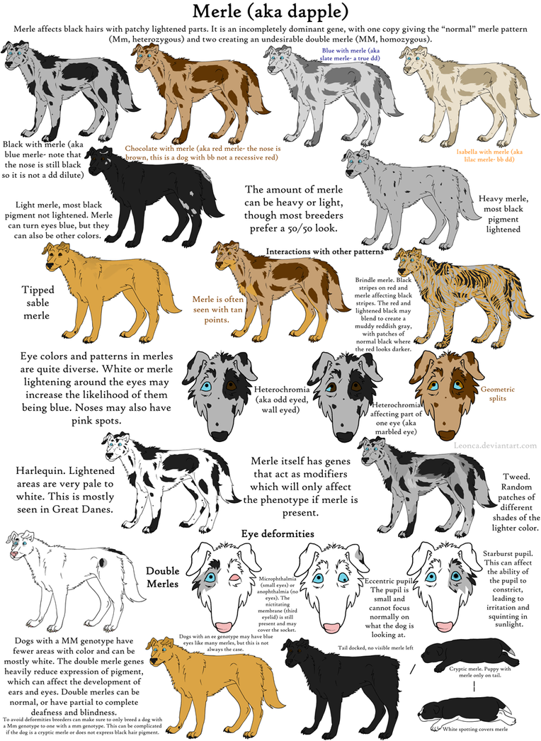 Dog colors guide merle by leonca on deviantart dog colors guide merle by leonca nvjuhfo Images