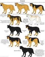 Dog Colors Guide- Agouti by Leonca
