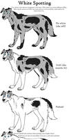Dog Colors Guide-WhiteSpotting