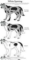 Dog Colors Guide-WhiteSpotting