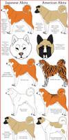 Akita Breeds Comparison