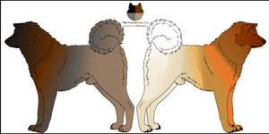 Dog Genetics Examples - Shades
