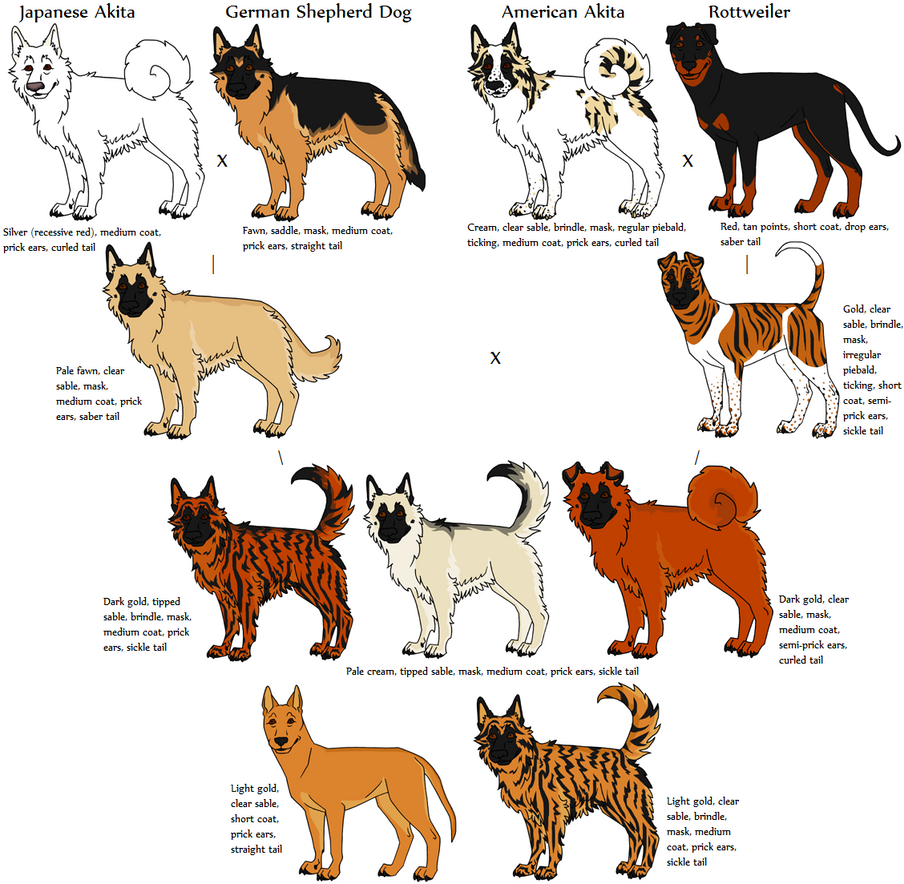 Blue Merle Aussie 408954419 additionally Canine Ge ics Research Application Mixed Breeds 384265846 in addition What You Need to Know About Dog Bite Injuries as well Colored Pencil Drawing Somali Ginger Cat 583972116 besides Fox Tattoo Designs. on german shepherd drawings