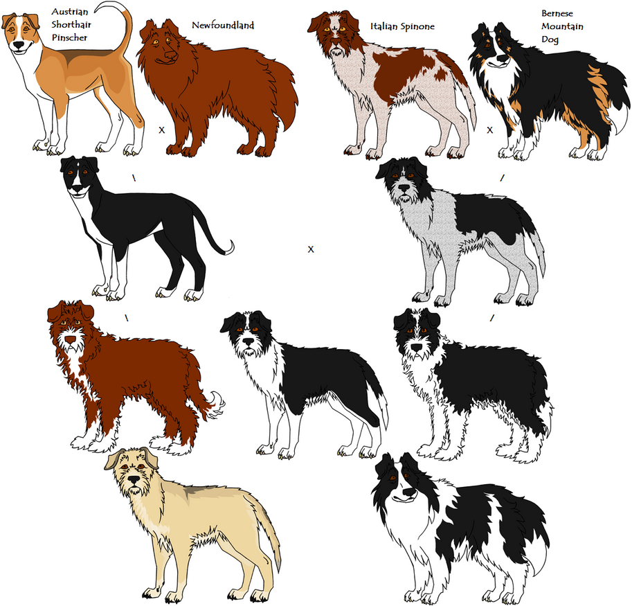 Random Dog Breed Generator